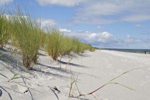 Düne am Strand von Prerow, Darß