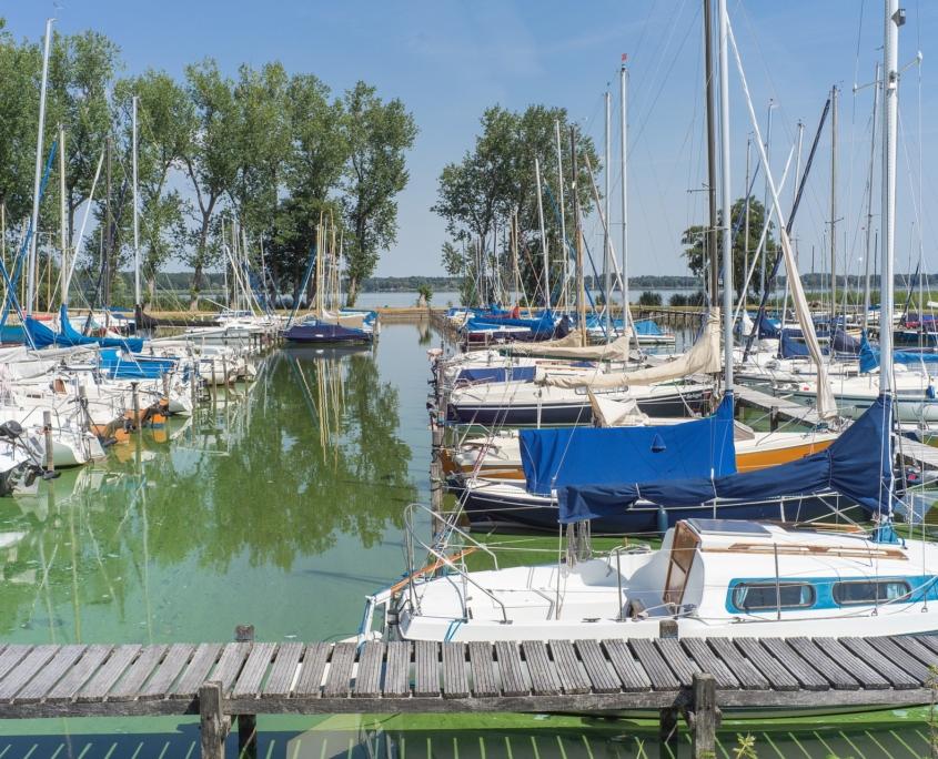 Blaualgen im Jachthafen